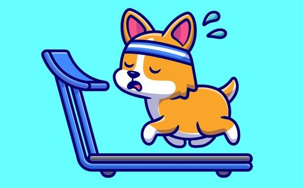 Labrador dog Training price