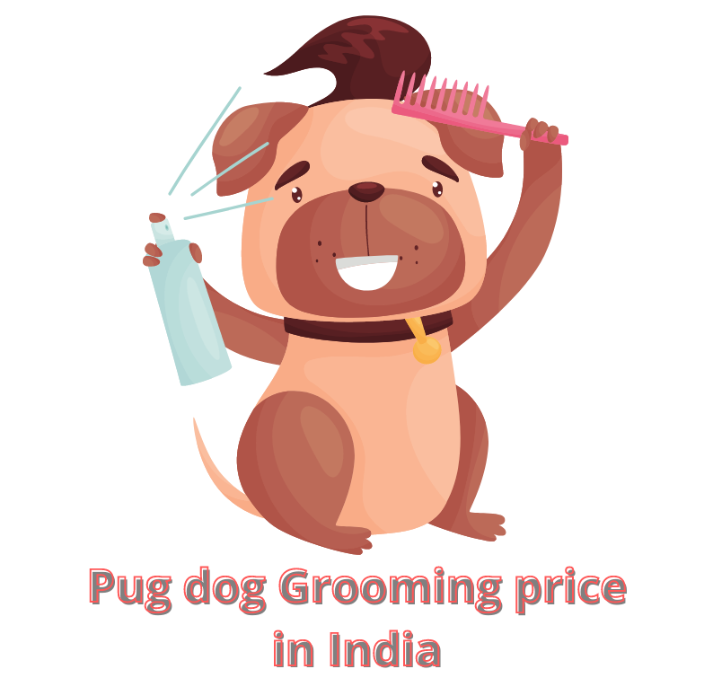 Pug Grooming