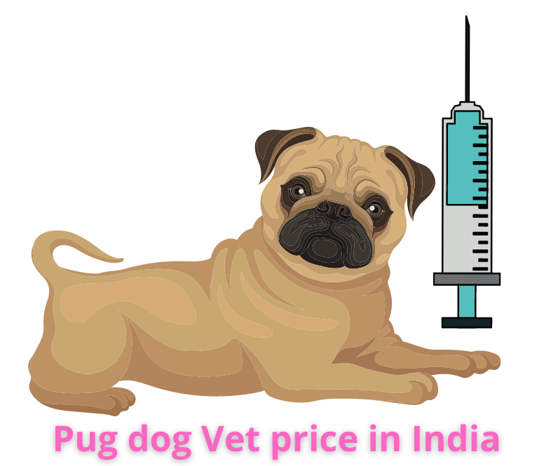 Pug dog Vet price in India