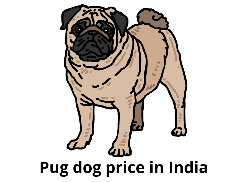 Pug dog price in India