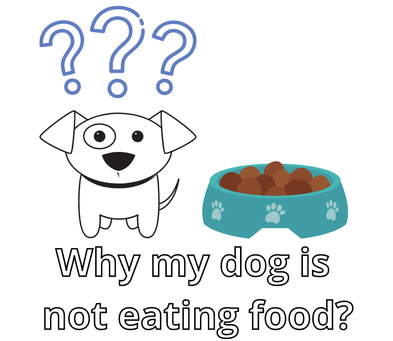 Why my dog is not eating food?