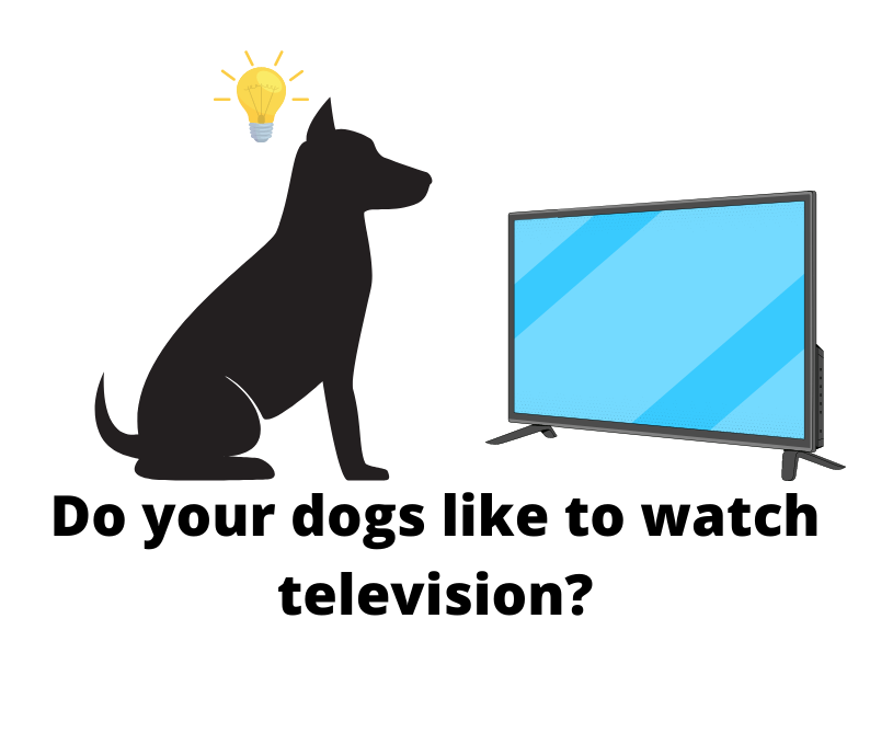 Do your dogs like to watch television?