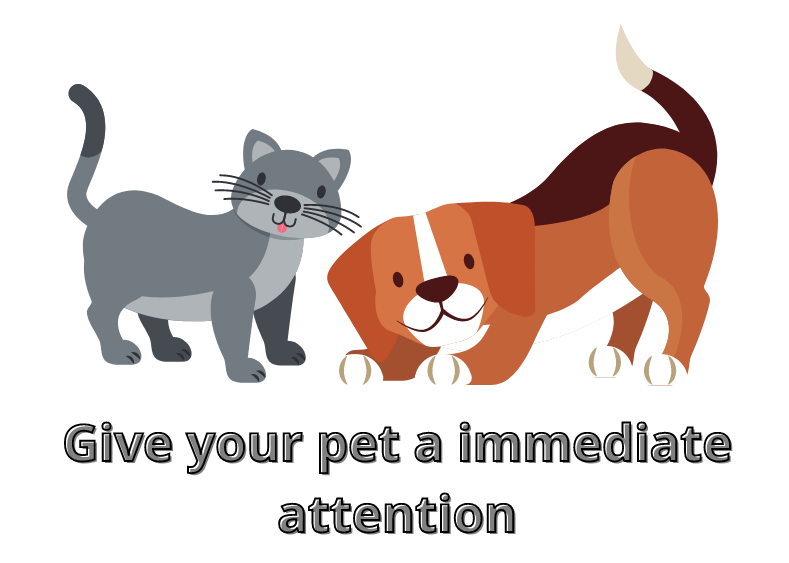 Give your pet a immediate attention