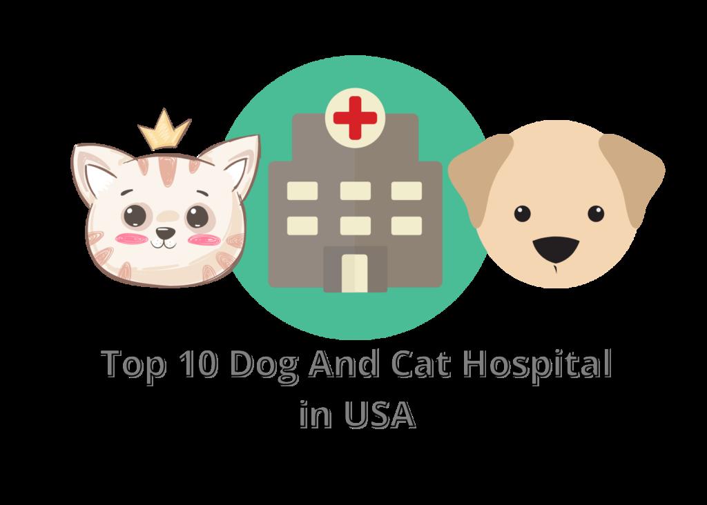 Dog And Cat Hospital