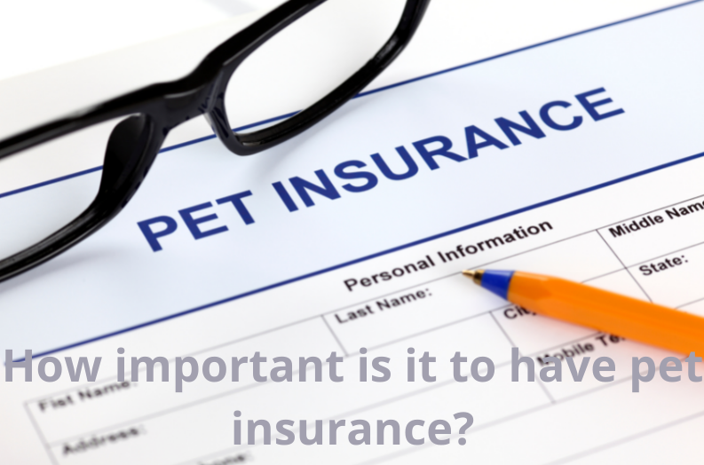 How important is it to have pet insurance?