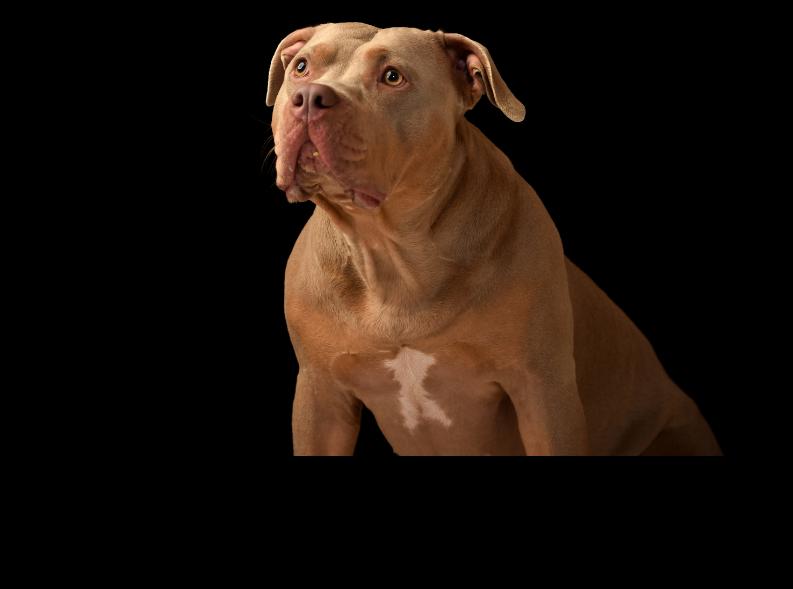Pitbull Dog Grooming Price in India