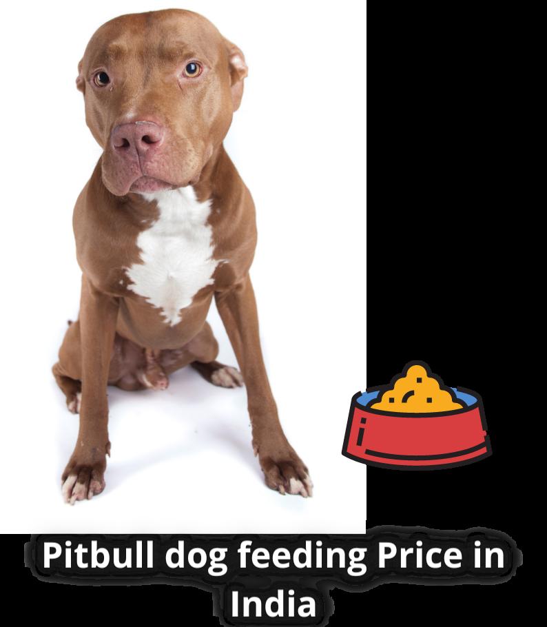 Pitbull dog feeding Price in India