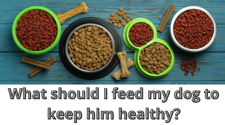 What should I feed my dog to keep him healthy?