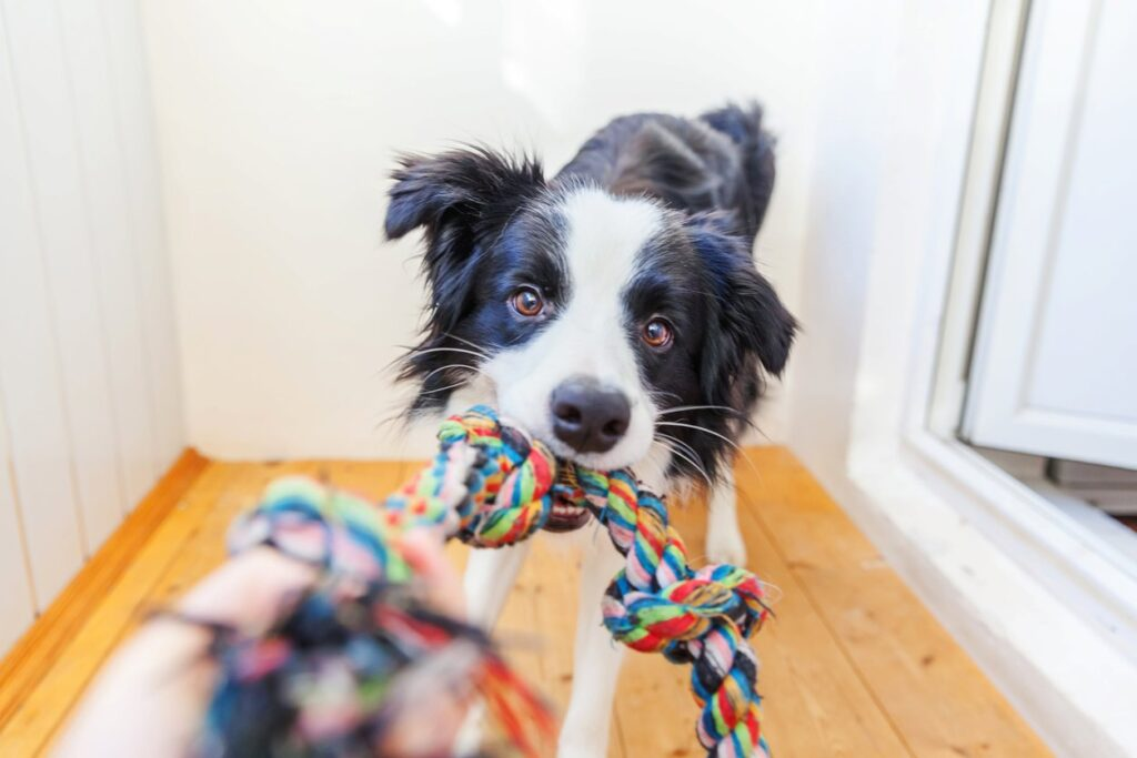 Games to Play with Your Dog